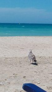 playas que ver en cadiz