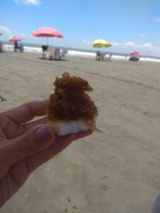 Gastronomía del Pacifico Colombiano